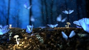 Butterfly, Blue, Forest, Fantasy, Woods