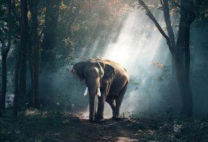 elephant walking on wet road